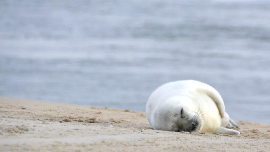 水辺の動物&ユニークな展示がいっぱい♡『伊豆・三津シーパラダイス』をご紹介♪