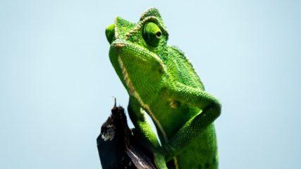 『体感型動物園 iZoo【イズー】』で珍しい爬虫類&両生類たちとふれあい&観察しよう!