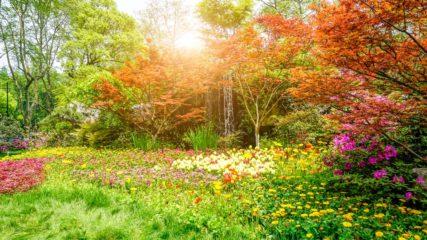 遊んで、学んで、癒されて♪ 御殿場市の『富士山樹空の森』をご紹介!