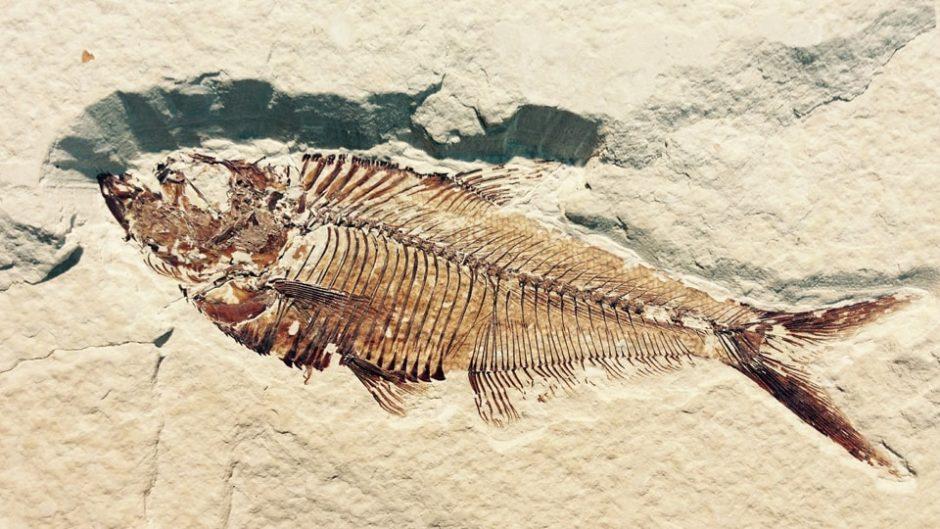 蒲郡で海と生命の誕生そして進化を学ぶ!「生命の海科学館」