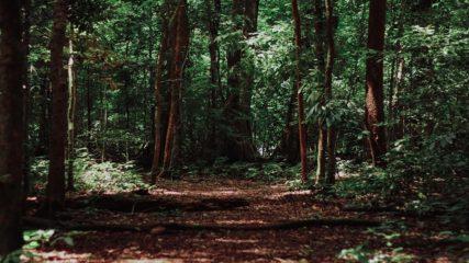 大自然に囲まれた「みのかも健康の森」で心も体もリフレッシュ!