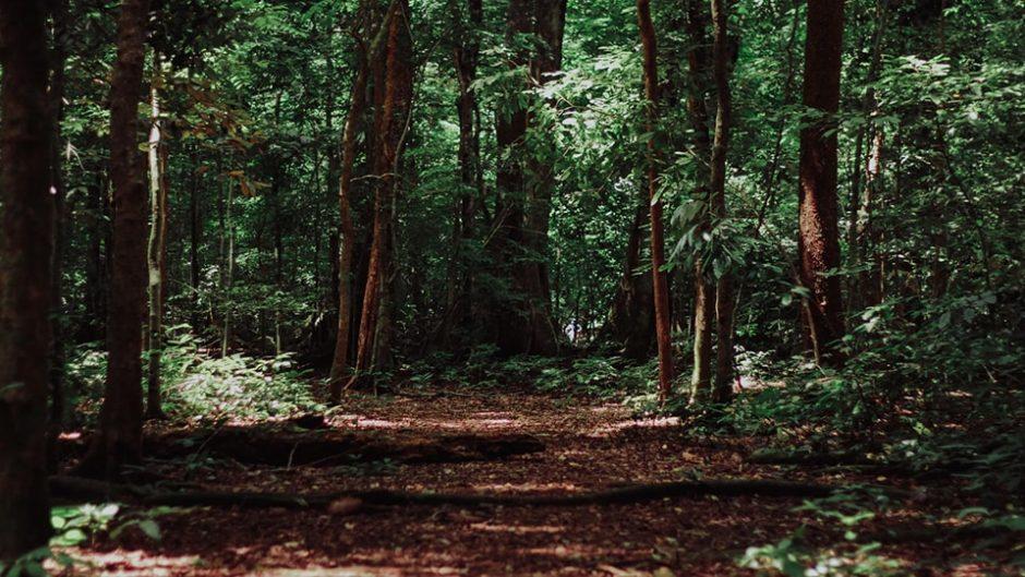 みのかも健康の森