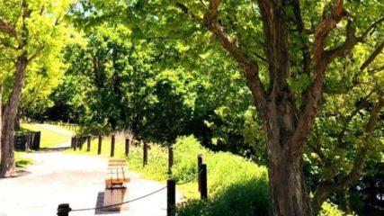 子どもと一緒に遊ぼう!「愛・地球博記念公園(モリコロパーク)」