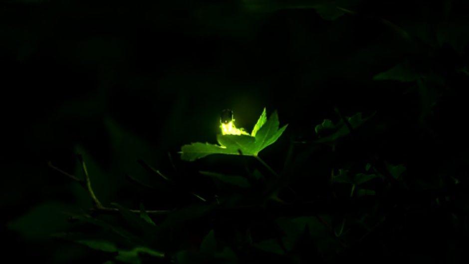 大自然の神秘をとくとご覧あれ☆なばなの里の『ホタルまつり』