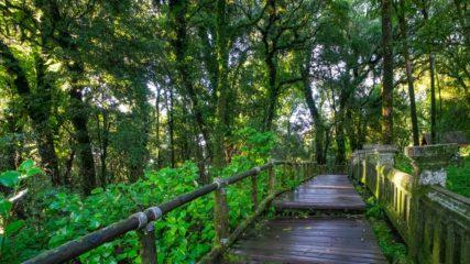 大自然の中でワクワクが止まらない!森や川とふれあう「大杉谷自然学校」