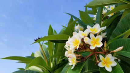 入園無料!ハイビスカスやヒスイカズラが咲く『下賀茂熱帯植物園』で南国気分♪