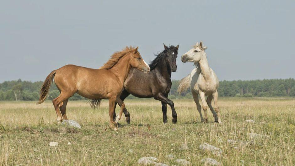 ビギナー大歓迎!『伊豆下田乗馬クラブ』で乗馬を体験しよう♡