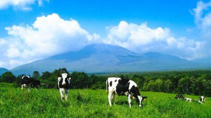 澄み渡る空気と美しい景色!天空の牧場で、おいしい牛乳やソーセージはいかが?
