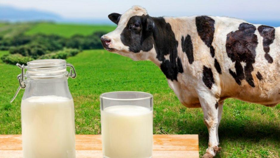 伊豆丹那の酪農王国 オラッチェ  ブランド牛乳「丹那牛乳」を存分に味わえる牧場