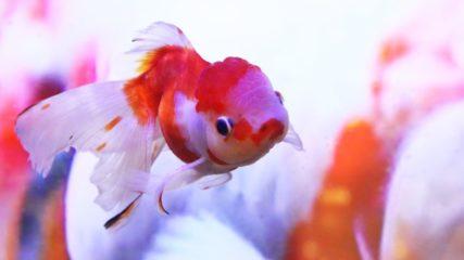 金魚と水草の楽園♪「水中楽園aquarium」