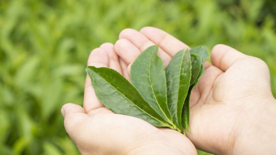 お茶の香りに包まれる、ここだけの体験♡「香りの丘 茶ピア」