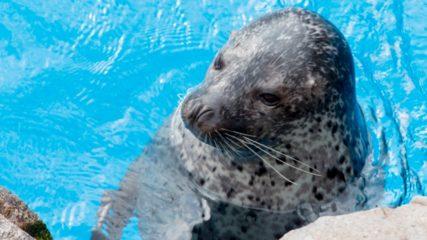 下田海中水族館 海洋性哺乳類とふれあえるレア体験!