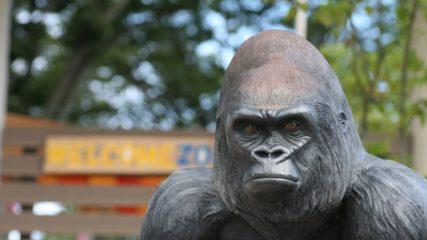 【#StayHome④】おうち時間でも動物園や水族館が楽しめる!① SNS配信の施設をご紹介!!