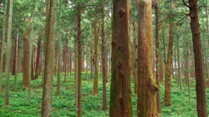 静岡で自然を満喫するならアクティ森で決まり!体験やアトラクションも充実