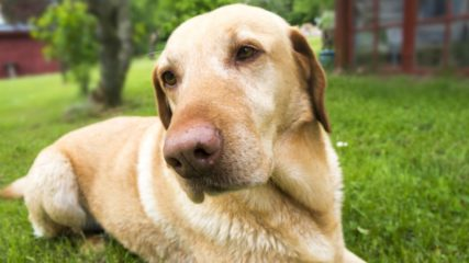 「盲導犬の里 富士ハーネス」で社会科見学!施設情報をご案内