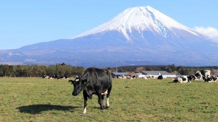 富士山に一番近いミルク王国!「富士山朝霧高原 富士ミルクランド」