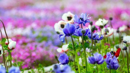 花や緑に囲まれた美しい風景が広がる「浜名湖ガーデンパーク」