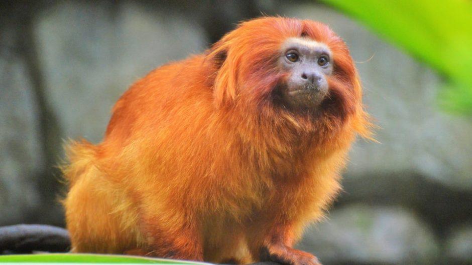 120種を超えるさまざまな動物たちに出会える「浜松市動物園」