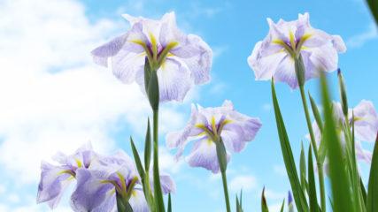 家族で自然を満喫しよう!入園無料の「岐阜県百年公園」