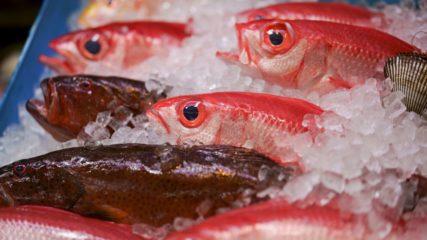 迫力満点!セリ市場の様子が見学できる施設「沼津魚市場 INO」