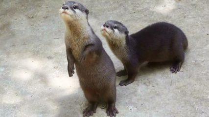 海の動物たちが可愛い♡『伊勢夫婦岩ふれあい水族館 伊勢シーパラダイス』をご紹介