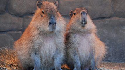 さまざまな動物そしてサボテンに出会える!「伊豆シャボテン動物公園」