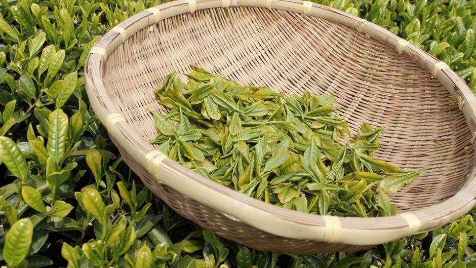 お茶と田舎と、時々ご飯♪静岡満喫「マルモ農園」