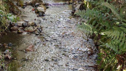 映えること間違いなし!四季折々折の景色が楽しめる「波瀬植物園」