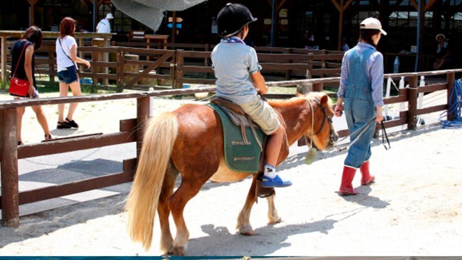 【初心者歓迎】パロミノポニークラブで気軽に乗馬体験!