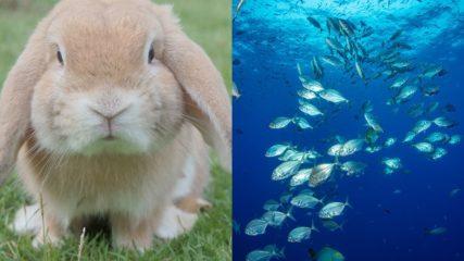 動物園に水族館も!?楽しいがいっぱいの「豊川市赤塚山公園」