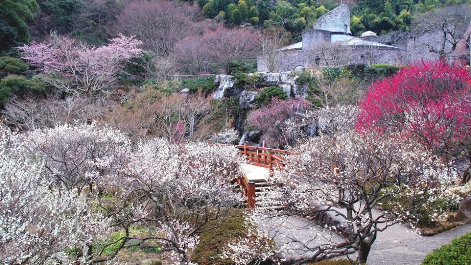 東海エリアで梅を鑑賞するなら「熱海梅園」がオススメ!