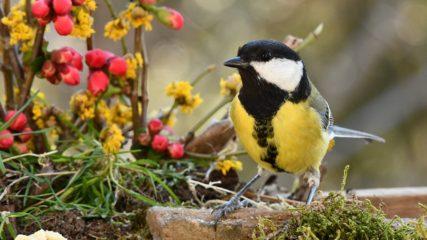 花と鳥のコラボレーション!「富士花鳥園」