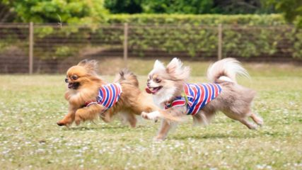 富士山のふもとでワンちゃんと一緒に最高の時間を過ごそう!「Field Dogs Garden」