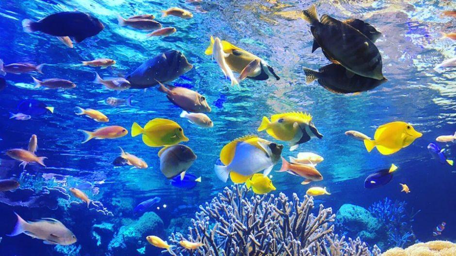 地元の川や海にいる身近な生き物たちに出会える!「碧南海浜水族館」