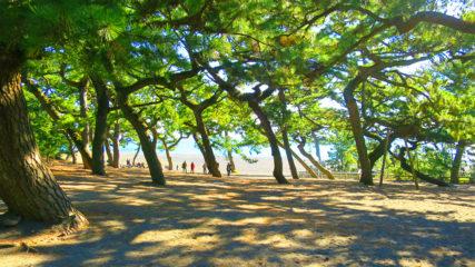 名勝・三保松原の魅力を体感!静岡市三保松原文化創造センター「みほしるべ」