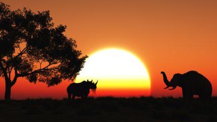 「マコンデ美術館」アフリカ発祥の芸術に特化した美術館は世界でここだけ!