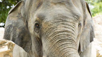 入場無料の「岡崎市東公園動物園」なら気軽に動物たちに会える!