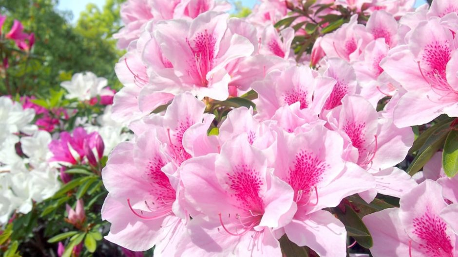 趣ある日本庭園と四季折々の景観に癒される「大倉公園」