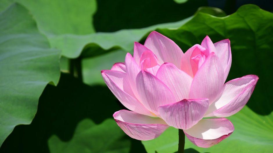 「蓮華寺池公園」で楽しむ、「花・水・鳥・笑顔」