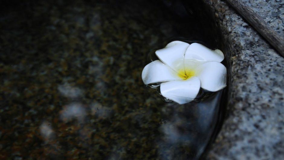 刀剣、絵画、庭園…日本文化を「佐野美術館」で味わおう!