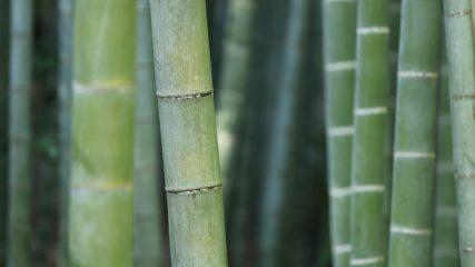 【富士竹類植物園】日本唯一の竹だけの植物園!世界の竹が500種類以上!