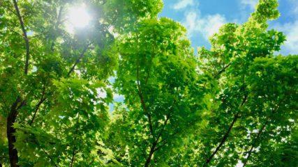 「22世紀の丘公園」美しい樹林で溢れた未来を信じて!
