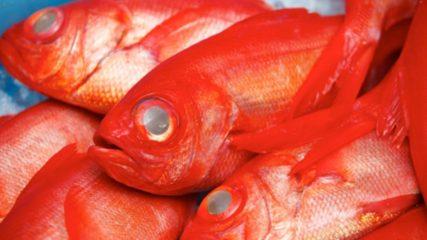 新鮮な魚を安く食べるならここ!【焼津さかなセンター】