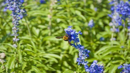 名古屋港に広がる庭園で素敵な時間を過ごそう!「ブルーボネット」