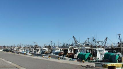 【一色さかな村・さかな広場】その日に水揚げされた新鮮な魚介類をゲットせよ!