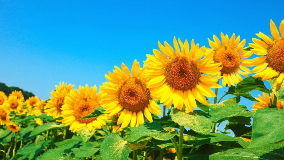 夏の思い出づくりは浜名湖ガーデンパークで決まり!「サマーフェスタ2020」