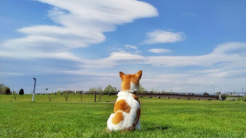 愛するわんこと一緒に遊びにおいで!「犬祭ぷちin土岐」