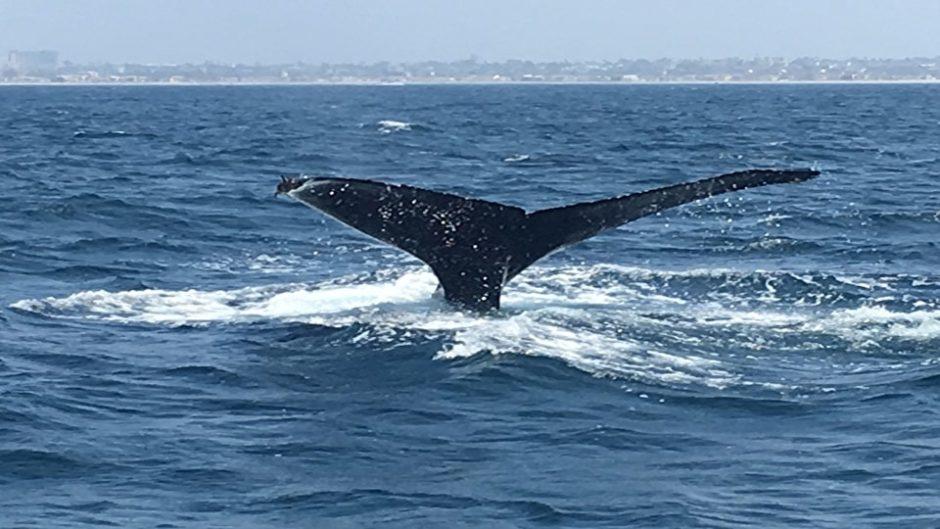 セミクジラの生態について知りたくない?「雲見くじら館」