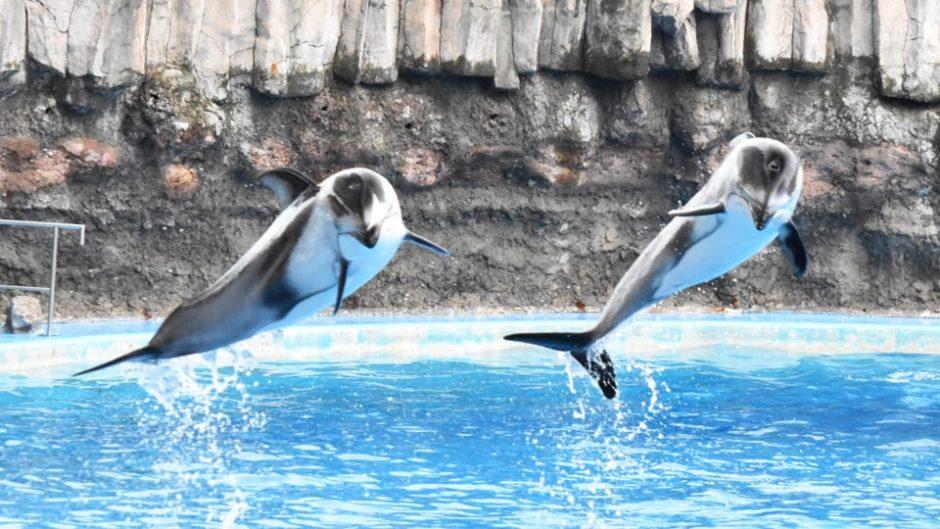 夜の名古屋港水族館を楽しめる「サマーナイトアクアリウム」が開催!