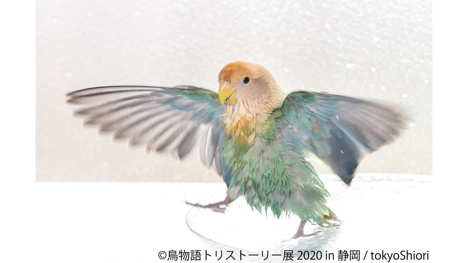 鳥物語トリストーリー展 2020 in 静岡
